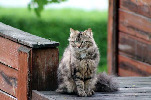 Фото Кошка сидит на пороге дома, by AbstractDr3ams