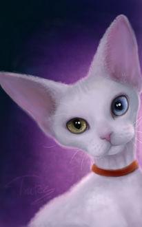 Фото Белая кошка с разноцветными глазами, by Trutze