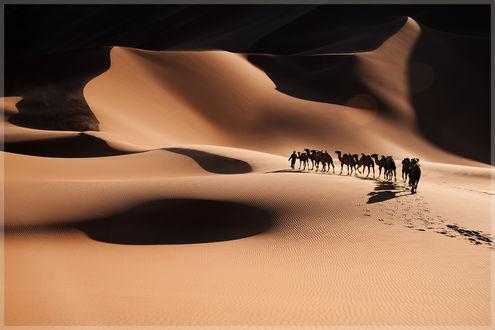Пустыня дюны барханы караван верблюды бесплатно