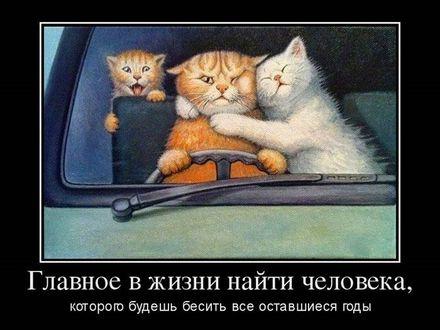 Фото Котовья семейка в автомобиле (Главное в жизни найти человека, которого будешь бесить все оставшиеся годы)