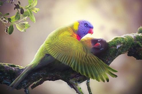 Фото Два влюбленных попугая