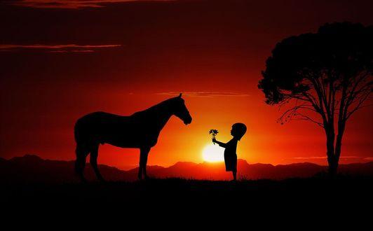 Фото Девочка протянула цветы лошади, ву corinna_kr