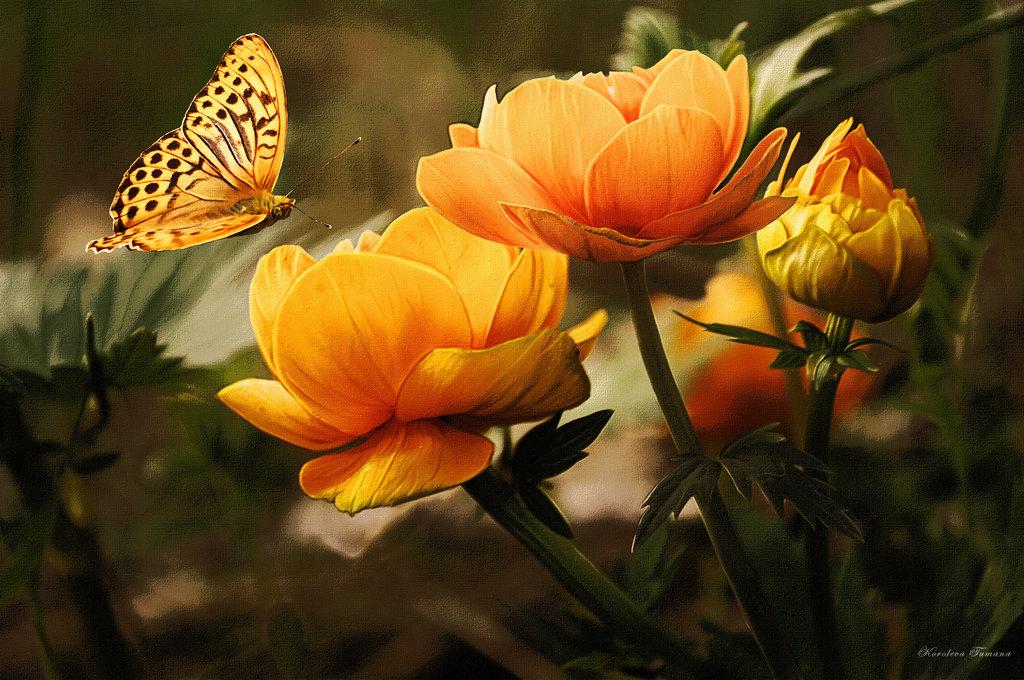 Тебя, открытки с бабочками фото