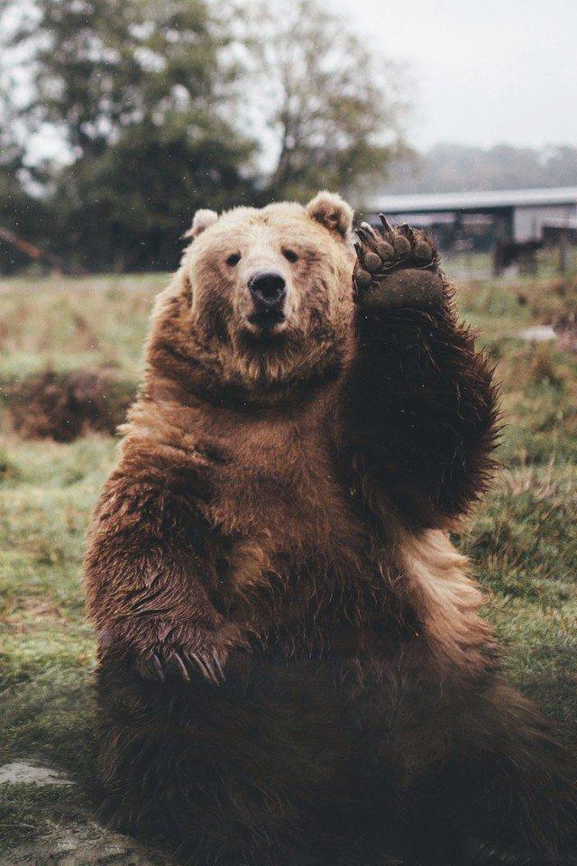 картинка медведь машет лапой доброжелательная атмосфера