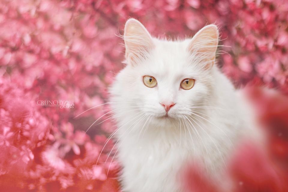 картинка красивой белой кошки в цветах для