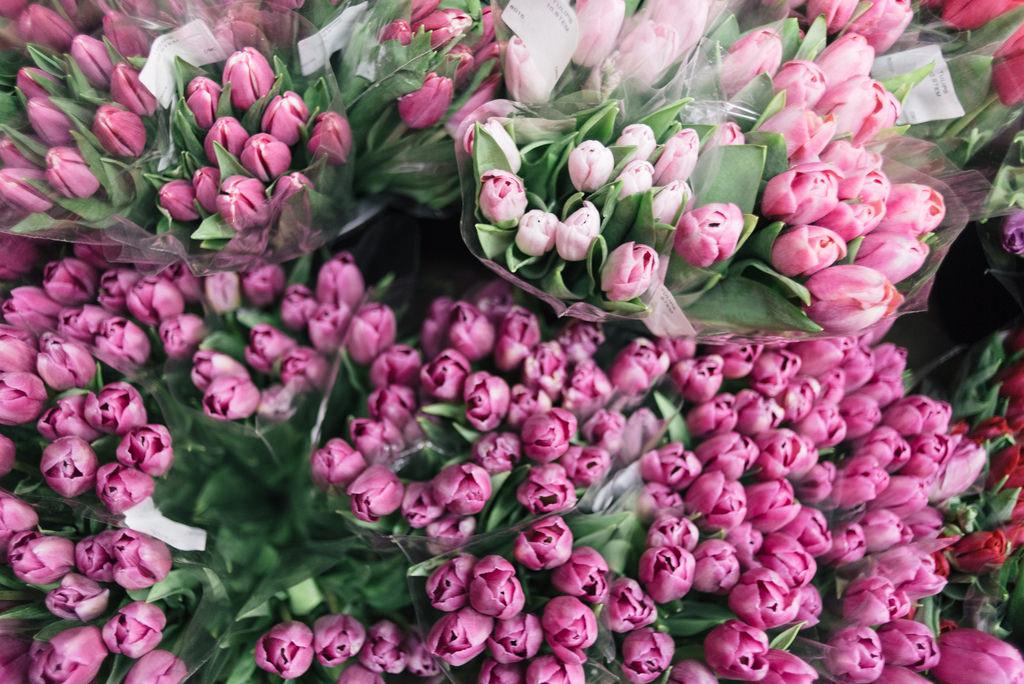 много тюльпанов в букете картинки чем виноват, пацаны