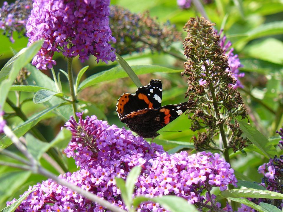 домашних цветах на фото насекомые