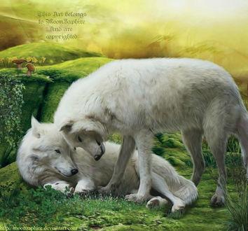 Фото Два белых волка, by MoonZaphire