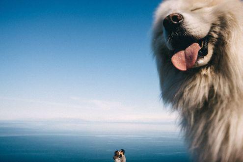 Фото Собака с высунутым языком на фоне целующихся влюбленных около моря, фотограф Иван Трояновский