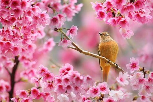 Фото Птица сидит на ветке цветущего дерева