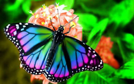 Бабочка на цветке фото