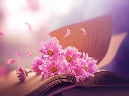 Фото Розовые ромашки на открытой книге, ву Ashraful Arefin