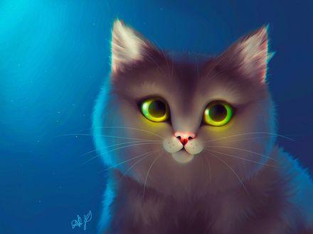 Фото Кошка с желто-зелеными глазами на синем фоне, by damaskrose