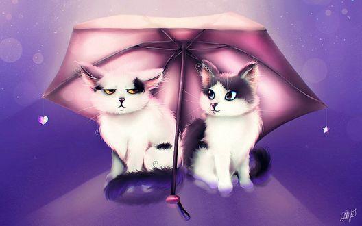 Фото Кот и кошка сидят под одним зонтиком, by damaskrose
