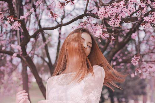 Фото Девушка стоит на фоне весенних цветущих деревьев