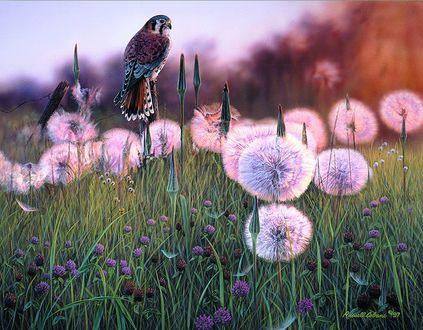Фото Птица сидит на сухой ветке среди отцветших цветов, художник Russell Cobane