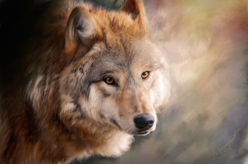 Красивые фото волк и девушка