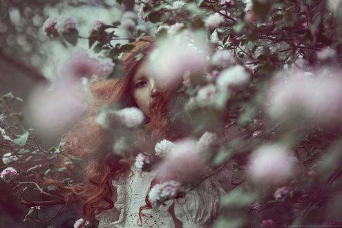Фото Девушка стоит среди цветущих веток дерева