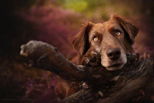 Фото Собака около дерева, by Anne Geier