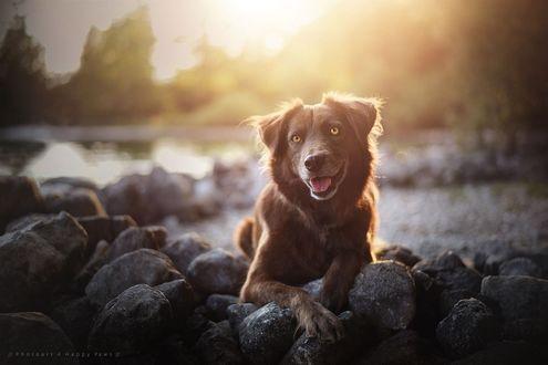 Фото Собака сидит на камнях на фоне озера, by Anne Geier