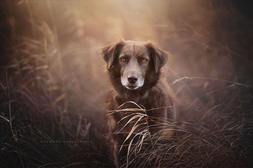 Фото Собака сидит в траве, by Anne Geier