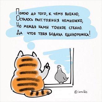 Фото Кот сидит на подоконнике и дразнит голубя через стекло (Порою до того, к чему влекло, Осталось расстояния немножко, Но между нами тонкое стекло, Да чтоб тебя боднул единорожка!), иллюстратор innubis