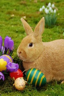 Фото Кролик с разноцветными пасхальными яйцами сидит на траве, рядом цветы крокуса