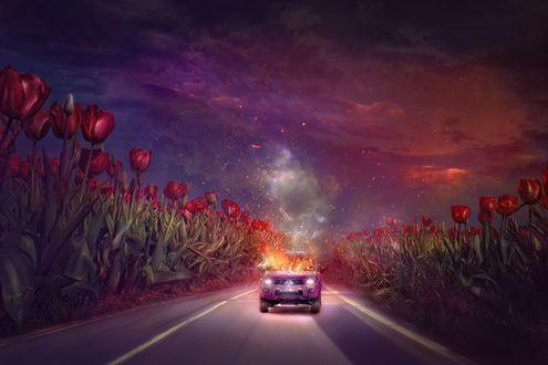 Фото Горящая машина едит по дороге, по обе стороны которой растут огромные тюльпаны, by thegirlcansmile