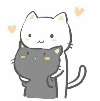 Фото Белый котенок обнимает черного