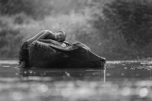 Фото Мальчик лежит на буйволе, который лежит в воде, by Saravut Whanset