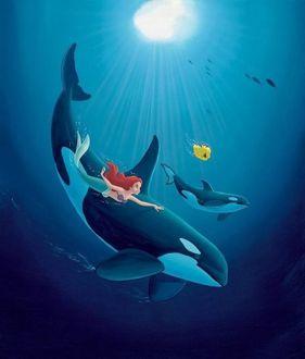 Фото Русалочка с Флаундером и двумя касатками плавают под водой, Русалочка / The Little Mermaid
