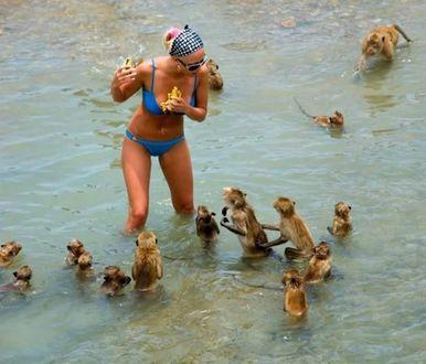 Фото Купающаяся дама, то ли подкармливает мартышек попрошаек, то ли пытается защитить свою еду