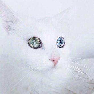 Фото Белая кошечка, у которой один глаз зеленый, а второй голубой