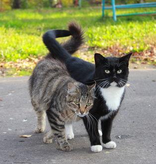 Фото Пара кошек на дорожке
