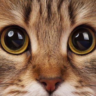 Фото Глаза кошки крупным планом