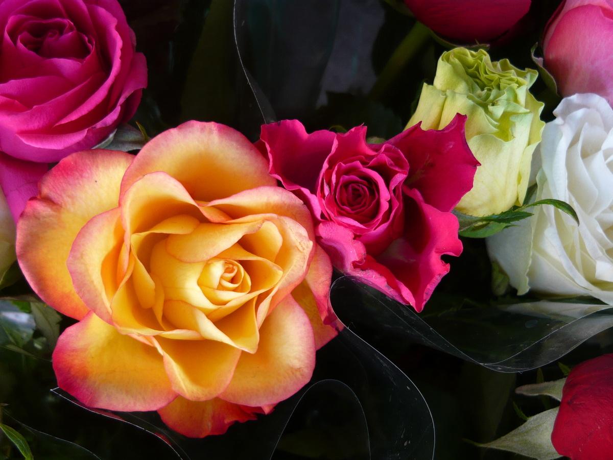 картинки розы всякие разные