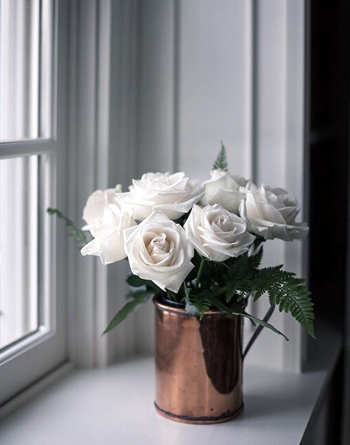 можно картинка роза на подоконнике каур