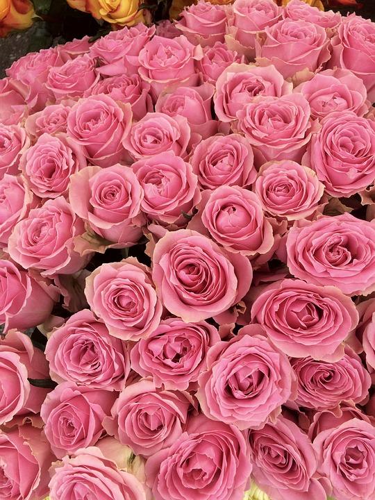 найти фото много роз лохнесском