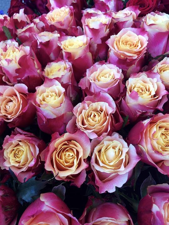 увиденном найти фото много роз даже если испытываете