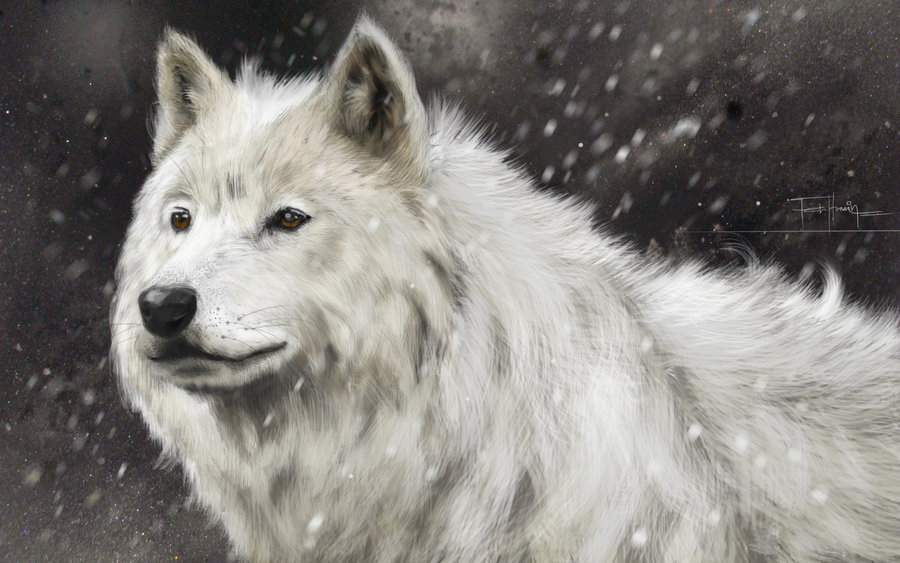 Фото Белый волк на фоне падающего снега, by farooky: http://photo.99px.ru/photos/241995/