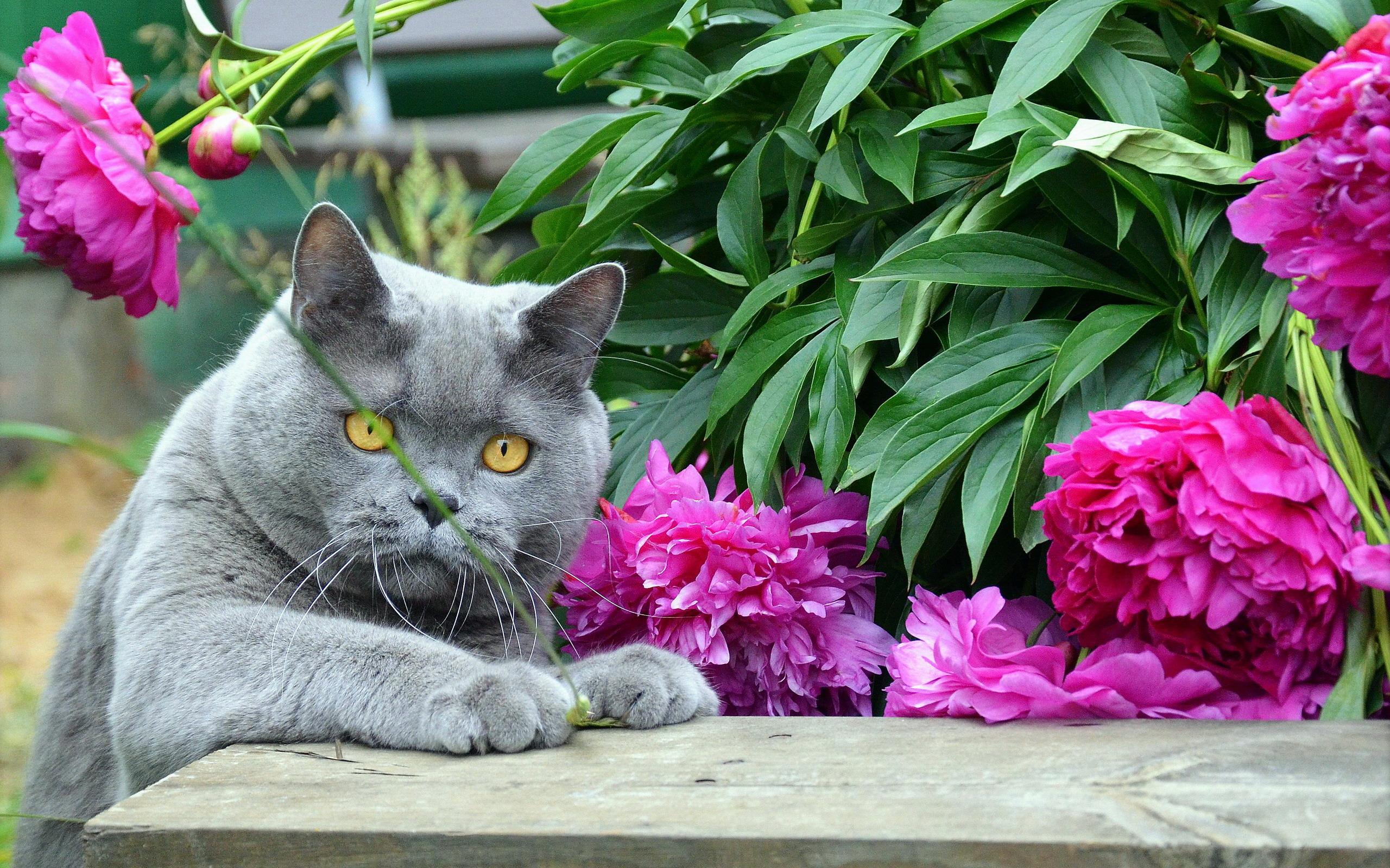 Фото цветы и кот