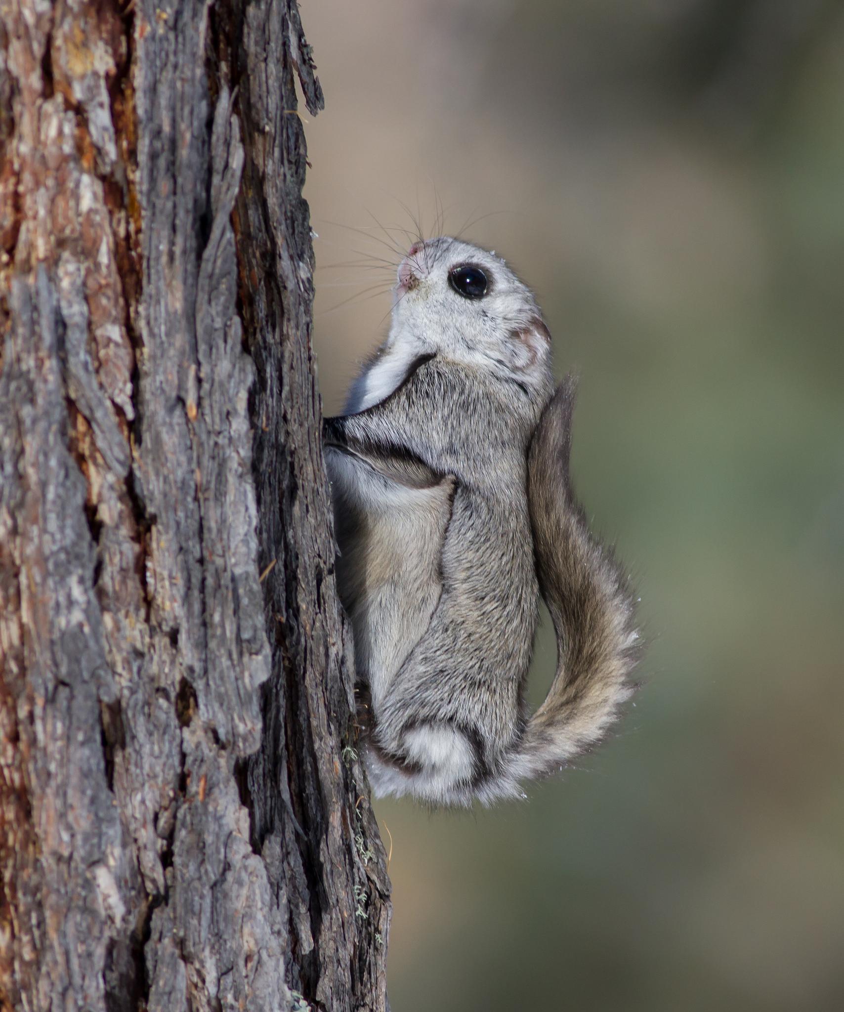 Garrett Williams Stats, Highlights, Bio m Stats Photos of flying squirrels