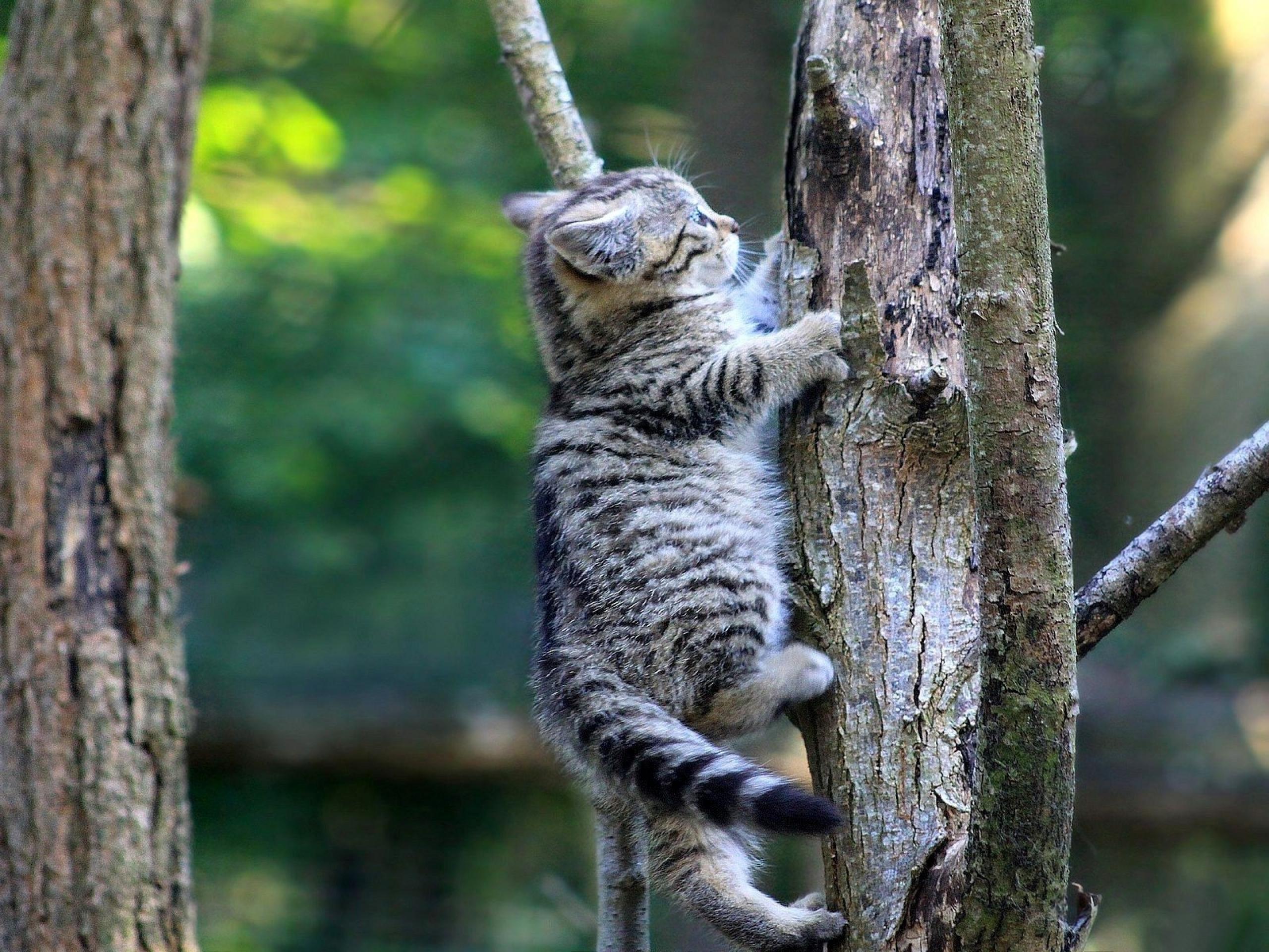 Рисунок кота лезущего на дерево 2