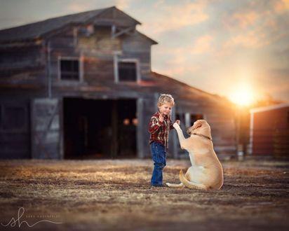 Фото Мальчик играется с собакой около дома, на фоне захода солнца, by Sara Hadenfeldt