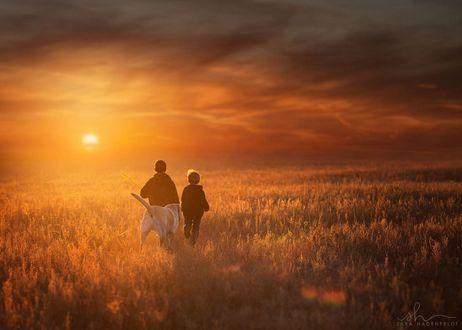 Фото Два мальчика с собакой в поле на фоне захода солнца, by Sara Hadenfeldt