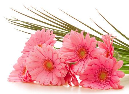 Фото Букет розовых герберов