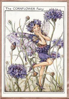 Фото Эльф-василек прогуливается по цветам (The cornflower fairy)