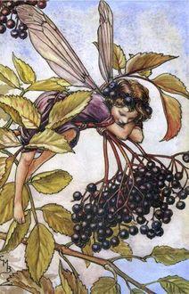 Фото Эльф качается на ветке с плодами