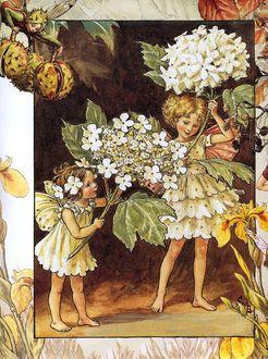 Фото Девочки-эльфийки нарвали белых цветов