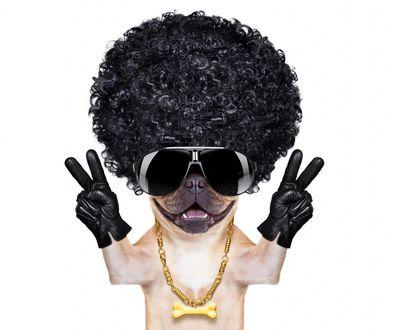 Фото Модный пес с кучерявой прической в перчатках и очках